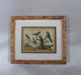 Framed Print, Birds on Branch, A