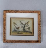 Framed Print, Birds on Branch, B