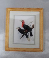 Framed Print, Red Neck Birds