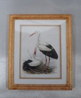 Framed Print, Black & White Crane