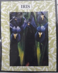 Iris Flower Kit, Purple