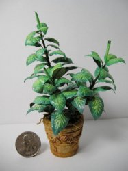Dieffenbachia Square Planter in Pot