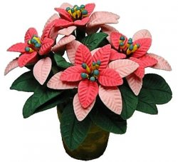 Pink Poinsettias in pot
