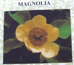 Magnolia Flower Kit