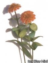 Zinnia Flower Kit, Orange