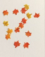 Fall Leaves, Variety 50pk