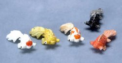 Gold Fish, Assorted, Sold Individually