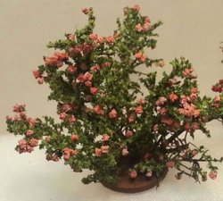 Small Rose Bush, Pink
