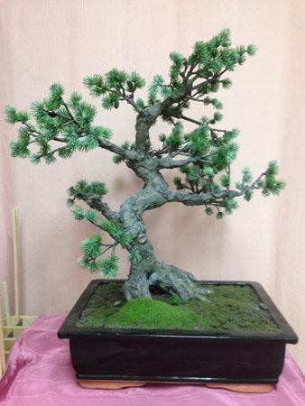 Bonsai Tree House Miniature Designs Full Service Dollhouse Miniature Shop In Georgia